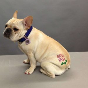 Creating-a-Stencil-Temporary-Tattoo-for-Your-Dog