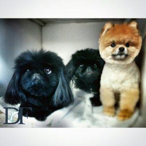 Lily, Zaza, and Zephyr