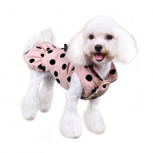 Annie-City-Coat-dog