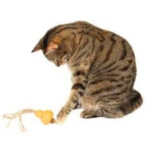 gall_gourd_octopus2
