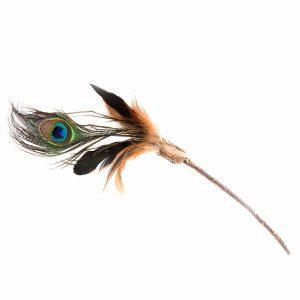 peacockfeatherteaser