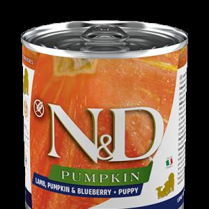 nd-lamb-pumpkin-can-puppy-10